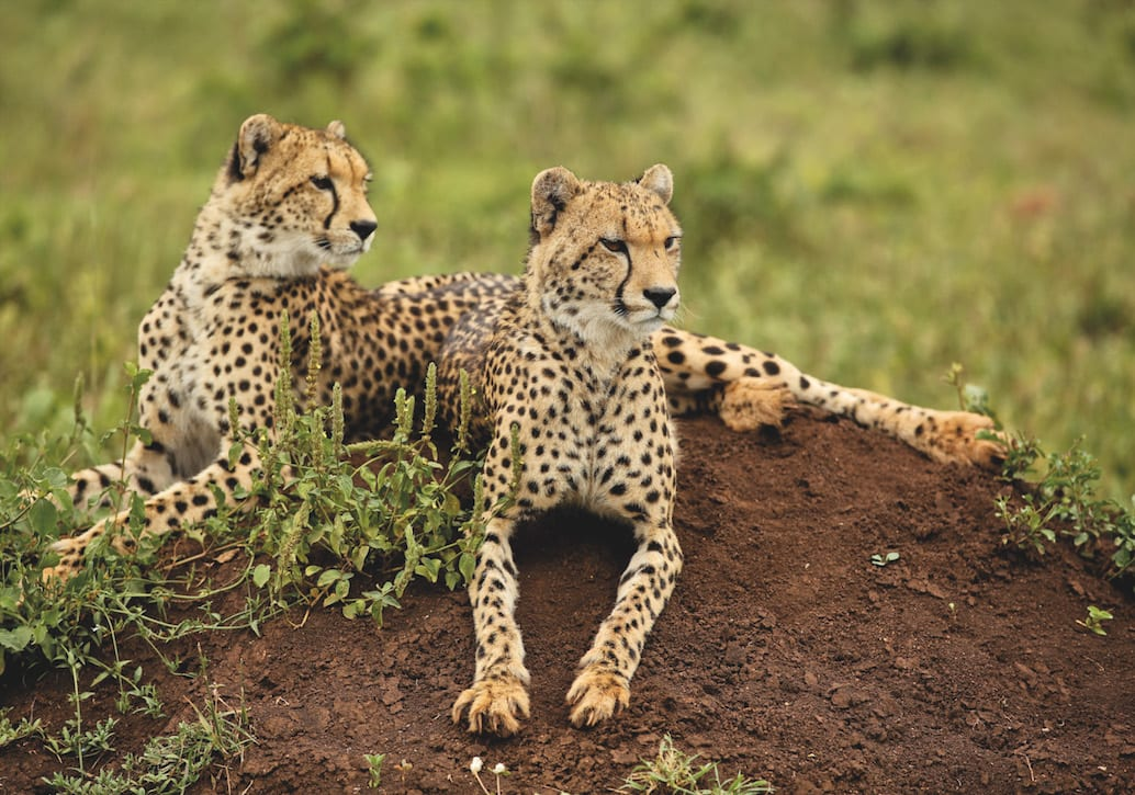 Wildlife-at-Phinda-Private-Game-Reserve (14)